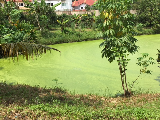 A serene, rustic setting at the farm. Backdrop is the duckweed pond