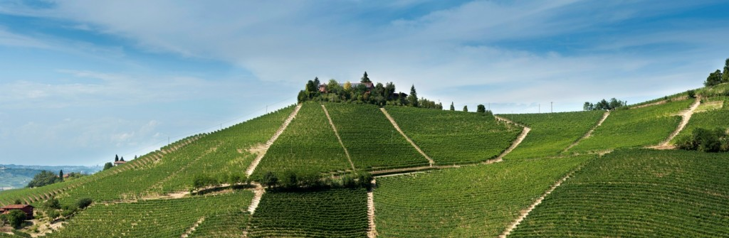 Steep slopes of the Il Bricco vineyard in Alba